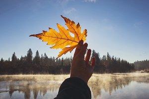 Autumn Leaf Fall River