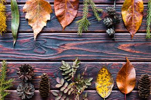 autumn leaves, cones and branches