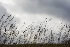 Long Grass on a Gloomy Day.