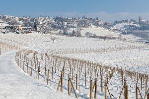 Vineyards on snowy field in Italy.