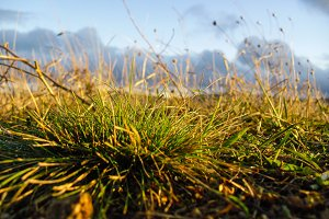 Green and dry yellow grass
