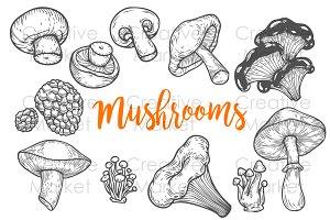 Mushroom hand drawn set