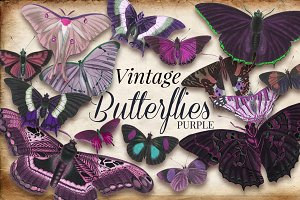 Vintage Purple Butterflies