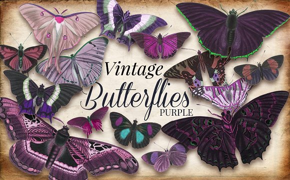 Vintage Purple Butterflies