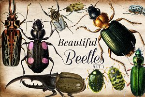 Vintage Beetles Set 1