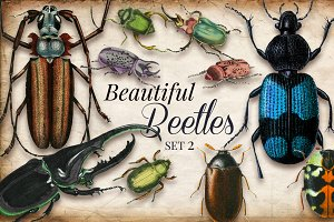 Vintage Beetles Set 2