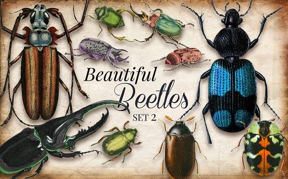 Vintage Beetles Set 2