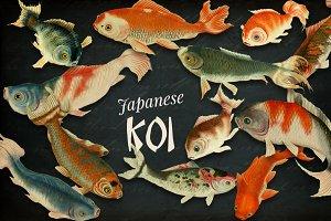 Japanese Koi Images