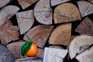 One tangerine on a pile of firewood