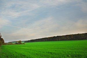 green lush meadow