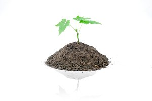 Green sprout of young tree