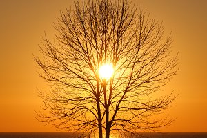 Silhouette of bare tree at sunrise