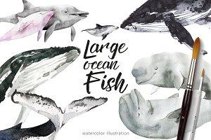 Large ocean Fish