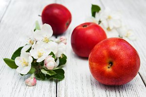Apple with spring blossom
