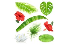 Vector set of leaves and flowers