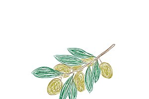branch of green olives, sketch style
