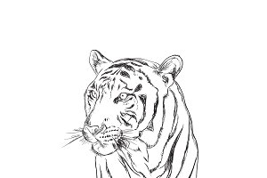 tiger, sketch style, vector