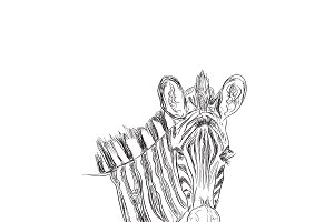 zebra, wild animal, sketch style