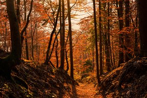 Autumn forest at sunset