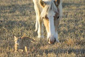Curious Pony I