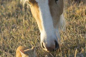Curious Pony III