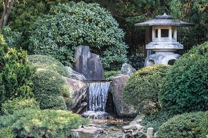 Japanese Tea House Gardens