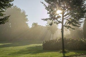 A foggy summer morning