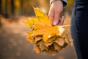 Female hands holding autumn leaves