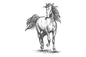Wild mustang stallion