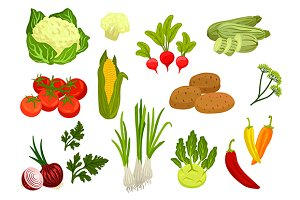 Farm vegetables isolated vector