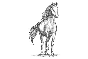 Sketched vector horse