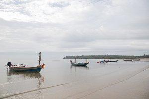 Many fishing boats