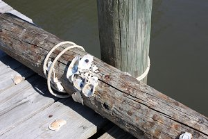 Oysters on a Dock Piling