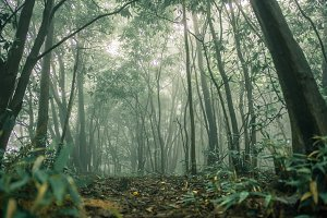 Forest Tree in rain forest
