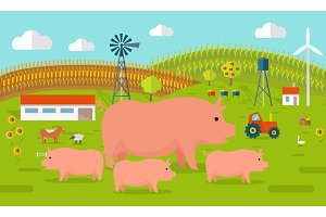 Pigs on Farmyard Concept