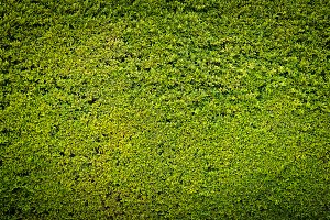 Green nature wall background