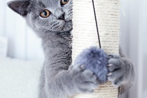 Young cute cat scratching his claws on a scratcher.
