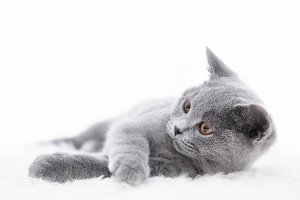 Young cute cat playing on white fur