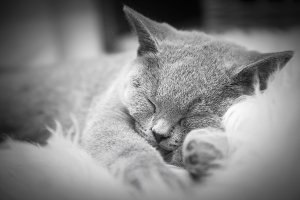 Young cute cat resting on white fur