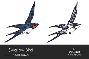 Swallow bird - vector hand drawn
