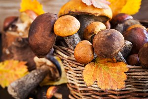 Wild forest edible mushrooms