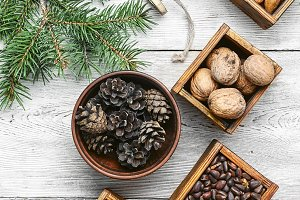 Wild nuts for Christmas