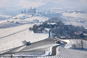 Rural road through snowy vineyards.