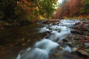 River in the Irati forest in autumn
