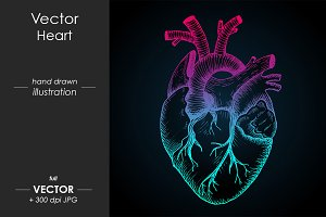 Abstract anatomical vector heart