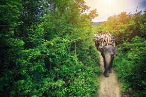 Thailand elaphant riding