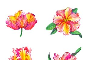 Set of Tulip Pencil Illustrations