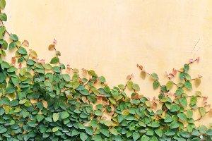 leaf on wall background