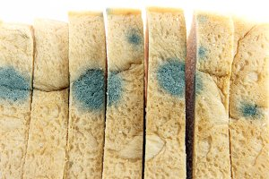 Fungi on Bread