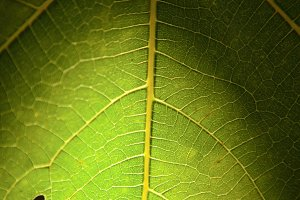 Details of nature